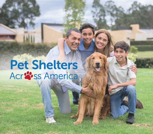Pet Shelters Across America